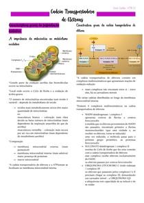 Bioquímica - CADEIA TRANSPORTADORA DE ELÉTRONS