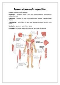 Formas de músculo esquelético