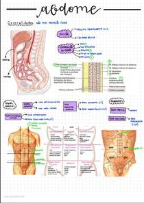 Cavidade abdominal