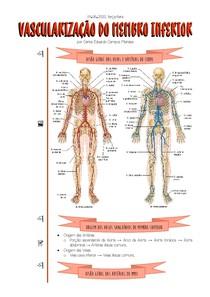 [09 06 2020] Vascularização do Membro Inferior
