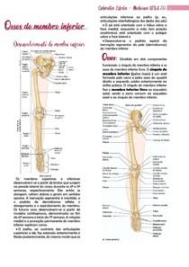 Ossos do Membro Inferior e correlações clinicas MOORE -  resumo