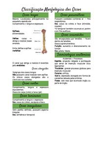 Classificação Morfológica dos Ossos