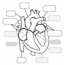 Coração - Atividade