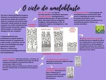 O ciclo do ameloblasto (Rafaelly Alves)