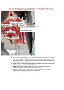 Cavidade Oral, Faringe e Pancreas