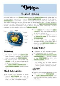 RESUMO DE ORGANELAS CELULARES