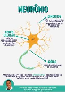 Neurônio - Anatomia Básica
