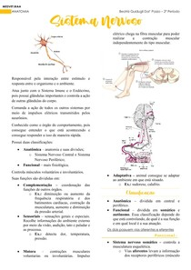 Anatomia - Sistema Nervoso