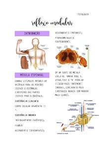 Reflexo Medular