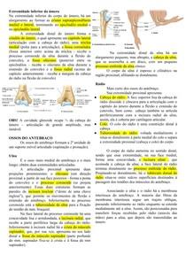 Anatomia do Braço, antebraço e mão