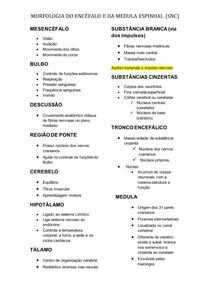 MORFOLOGIA DO ENCÉFALO E DA MEDULA ESPINHAL (anato)