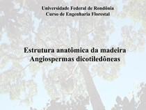 Estrutura anatômica da madeira de angiospermas