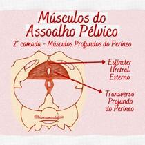 Músculos Profundos do Períneo - Assoalho Pélvico - @biaresumosdafisio