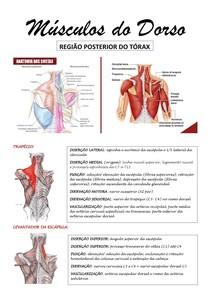 Resumo Músculos do Dorso
