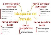 Mapa Mental Anestesia Maxila