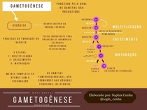 Mapa Conceitual - GAMETOGÊNESE - OOGÊNESE