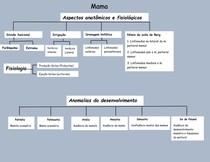 Mama: aspectos anatômicos, fisiológicos e principais alterações