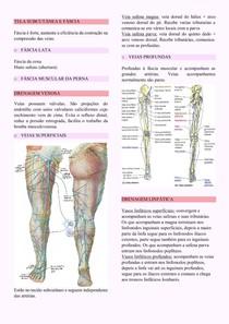 Membro inferior: fáscia, veias, vasos linfáticos, vasos eferentes e nervos cutâneos