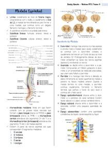 Medula Espinhal - meu resumo