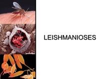 LEISHMANIOSES - MEDICINA - Parasitologia Médica e Doenças Para