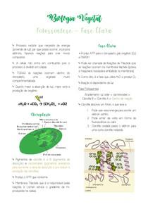 Fase clara da fotossíntese - Biologia Vegetal