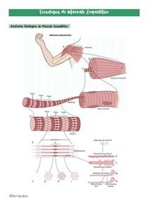Fisiologia do Músculo Esquelético - Resumo