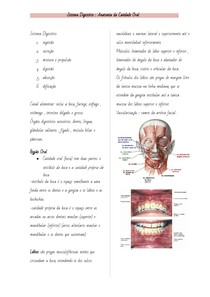Anatomia -Cavidade Oral
