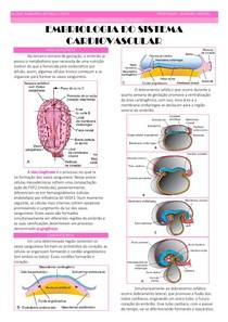 Embriologia do Sistema Cardiovascular