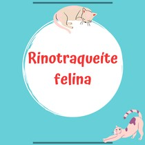 Rinotraqueite