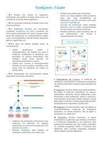 Sinalização celular