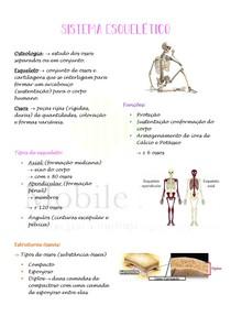 Anatomia Humana: Sistema esquelético