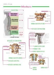 PLA Articulações e ligamentos