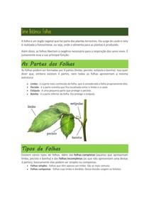 Série Botânica: folhas