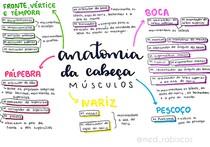 Anatomia da cabeça @med_rabiscos
