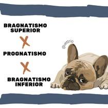 Bragnatismo e Prognatismo