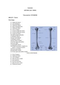 Anatomia BRAÇO
