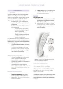Fisiologia da gestação