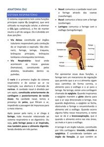 Anatomia (4) Sistema Respiratório