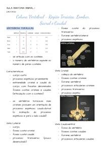 A8 C vert - região torácica, lombar, sacral e caudal