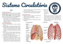 Sistema circulatorio pt 4: tórax