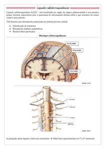 Líquido encefalorraquidiano