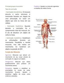 Resumo Anatomia básica