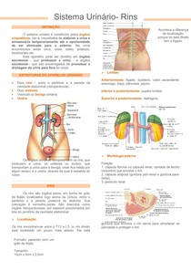 Sistema urinario-rins