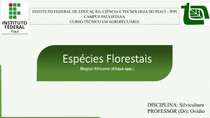 Especies Florestais: Mogno Africano ( Khaya spp.)
