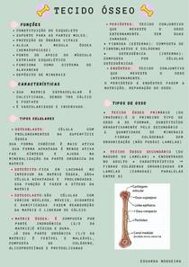 resumo tecido ósseo