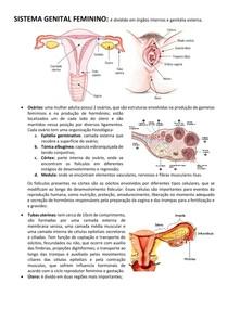 SISTEMA GENITAL FEMININO (embriologia(