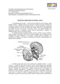 2° estágio - SISTEMA NERVOSO CENTRAL (SNC)