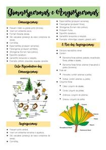 Resumo de Gimnospermas e Angiospermas