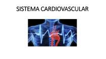 Sistema Cardiovascular - MATERIAL