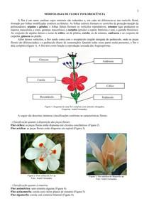 Morfologia de flor e inflorescência